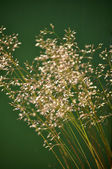 Swaying Grass — Stock Photo