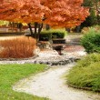 Autumn in the Park — Stock Photo #10219263