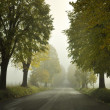 Foggy Avenue - Stock Photo