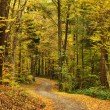 Path into autumn forest — Stock Photo #10219785