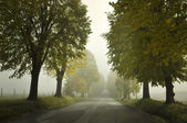 Foggy Avenue — Stockfoto