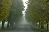 Lime tree avenue — Stock Photo