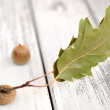 Acorn with Leaf - Stock Photo