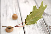 Acorn with Leaf — Stock Photo