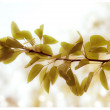 Tree branch — Stock Photo