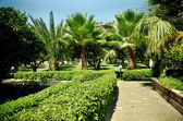 Asphalt path among palm trees and bushes — Stock Photo