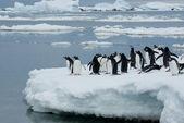 Pinguïns op het ijs. — Stockfoto