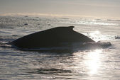 A humpback whale in the Southern Ocean-7. — Stock Photo