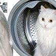 cat in the washing machine — Stock Photo