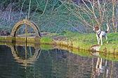 Hond stond nest naar een rivier weir gate — Stockfoto