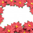 Red poinsettia Christmas frame — Stock Photo