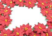 Red poinsettia Christmas frame — Stock Photo