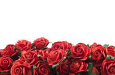 Red roses isolated — Stock Photo