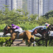 International Horse Racing in Hong Kong — Stock Photo