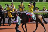 International Horse Racing in Hong Kong — Stock Photo
