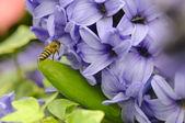 Abelha entre flores — Fotografia Stock