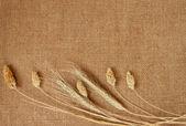 Tle przez płótnie i zbóż — Zdjęcie stockowe
