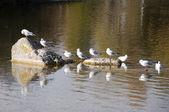 чайки в скалах — Стоковое фото