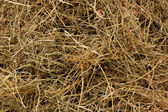 Hay in the background — Stock Photo