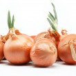Fresh bulbs of onion on a white background — Stock Photo