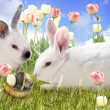 Rabbits And Chocolate Eggs — Stock Photo