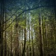 Stock Photo: Dark forest