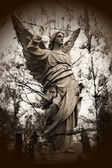 Old stone angel — Stock Photo