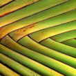 Texture and pattern detail banana fan — Stock Photo
