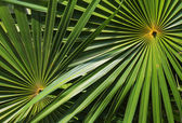 Pattern of palm leafs — Stock Photo