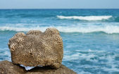 Dead coral against the sea — Stock Photo