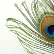 Close up of peacock feather on white — Stock Photo #9745333