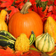 Colorful mini pumpkins — Stock Photo #9771982