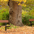 Benches in autumn park - Stock Photo