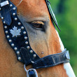 Horses eye with bridle — Stock Photo #9772657