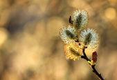 Bahar doğa kukum şubesi — Stok fotoğraf