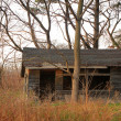 Stok fotoğraf: Abandoned house among the trees.
