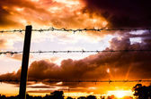 Barbed wire fence and the sun — Stock Photo