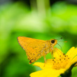 Butterfly macro in green nature — Stock Photo #10466646