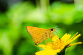 Butterfly macro in green nature — Stock Photo