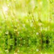 Fresh moss in green nature — Stok fotoğraf