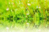 Fresh moss and water drops in green nature — Stock Photo