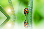 Ladybug in green nature — Stock Photo