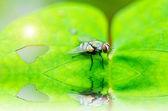 Mucha w zieleni — Zdjęcie stockowe