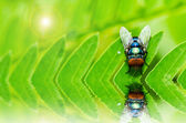 Fly macro in green nature — Stock Photo