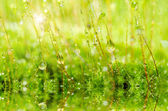 Fresh moss in green nature — Stock Photo