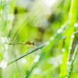 Dragonfly and sunlight in garden — Stock Photo