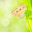 Butterfly in green nature - Stock Photo