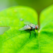 Fly in green nature - Stock Photo
