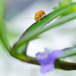 Orange beetle and violet flower in green nature - Stock Photo