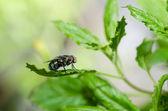 Voar na natureza verde — Foto Stock